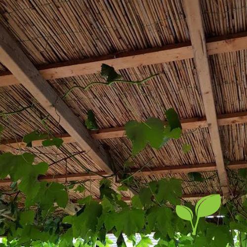 Rietmat plafond
