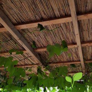 Dikke rietmatten plafond