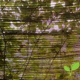Wilgenmat 150 x 300 zonwering begroeien
